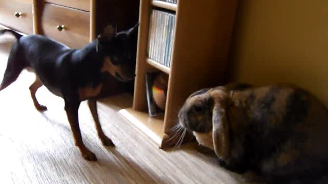 My dog and rabbit :)